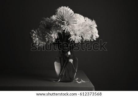 Gerber Flowers Vase Black White Shot Stock Photo Edit Now