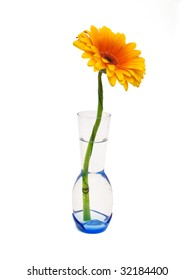 Gerber orange in a glass vase on a white background, isolated