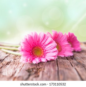 gerbera daisies on wood with nature background