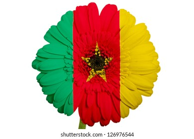 gerbera daisy flower in colors national flag of cameroon on white background as concept and symbol of love, beauty, innocence, and positive emotions