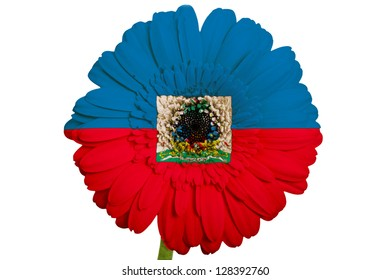 gerbera daisy flower in colors national flag of haiti on white background as concept and symbol of love, beauty, innocence, and positive emotions