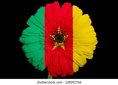gerbera daisy flower in colors national flag of cameroon on black background as concept and symbol of love, beauty, innocence, and positive emotions