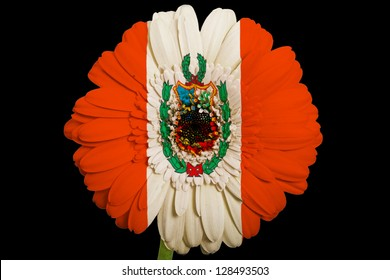 gerbera daisy flower in colors national flag of peru on black background as concept and symbol of love, beauty, innocence, and positive emotions