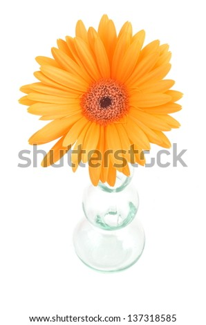 Gerbera Daisy Flower Glass Vase Stock Photo Edit Now 137318585