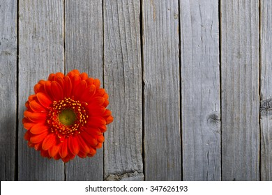 gerbera daisy flower on old rustic wooden table background