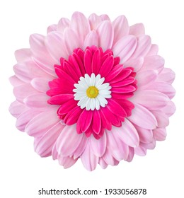 Gerbera and Daisy isolated against white background