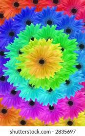 Gerbera daisy spiral