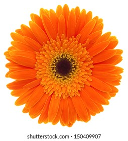 Gerbera. Deep focus. No dust. No pollen. More flower head in my portfolio.