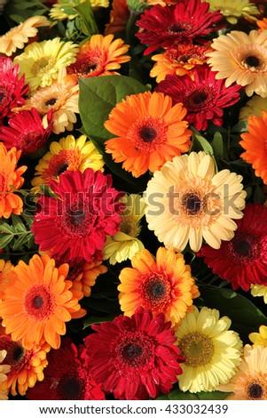 Gerbera Flower Arrangement Red Orange Yellow Stock Photo Edit Now