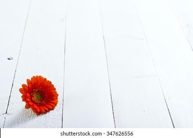 gerbera flower head on white wood table background