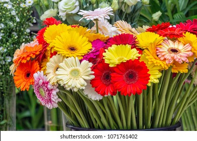 Gerbera flowers of different colors for sale at a Dutch florist