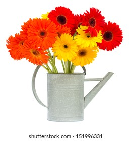 gerbera flowers in gray watering can isolated on white background