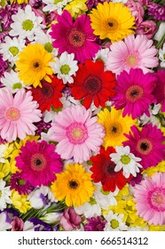 Gerbera and other flowers arranged as a colorful natural background image with white, yellow, red and pink blossoms