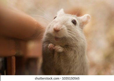 Gerbil smooth background