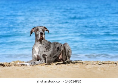 German dog on the beach of the Black Sea