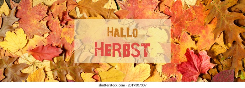 German Hallo Herbst ( eng. Hello Autumn ) background with text on fallen leaves. Fall banner with copy space - Shutterstock ID 2019307337