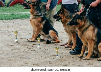 German sheepdogs with cups and male legs