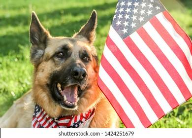 German Shepherd with American Flag