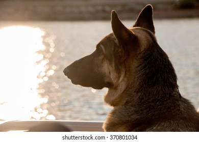 German Shepherd Boating