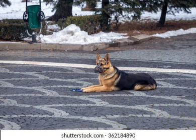 German Shepherd dog with anti bite guard sitting in a park