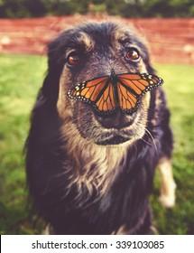 Imagenes Fotos De Stock Y Vectores Sobre Fall Pet Shutterstock
