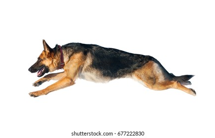 German shepherd dog in jump isolated over a white background