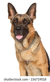 German Shepherd dog. Portrait on a white background
