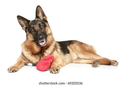 German shepherd dog with red Valentine heart lying on a white background