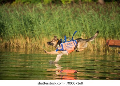 "German Shepherd, Dog rescue service on the water training, ""Rescue on the water"" text on russian"