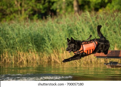 German Shepherd, Dog rescue service on the water training