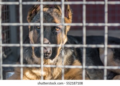 German Shepherd dog sits in a cage