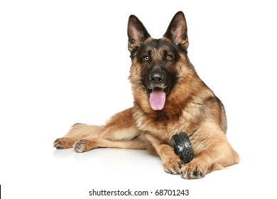 German Shepherd dog with a toy on a white background