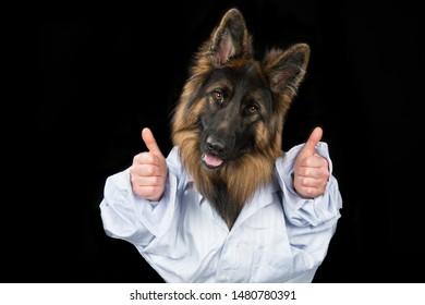 German Shepherd with human hands