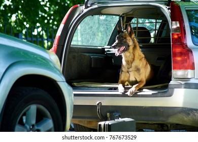 The german shepherd is lying into the car trunk. The dog is missing its owner.