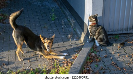 German shepherd mix and domestic cat in friendly community