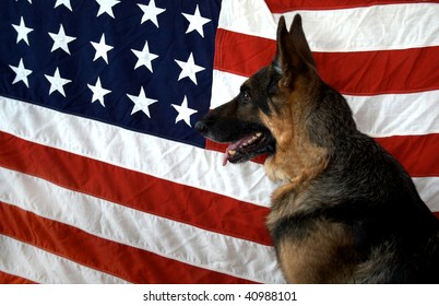 German Shepherd on flag backdrop to symbolize our WWII canine veterans
