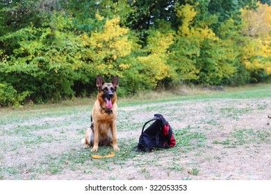 German Shepherd, German Shepherd, German Shepherd on the grass, dog in the park,