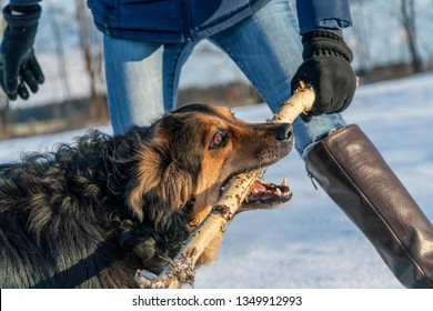 German shepherd plays with the mistress on a sunny winter day