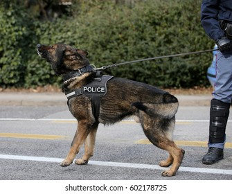 German shepherd police dog while patrolling the city streets to prevent terrorist attacks