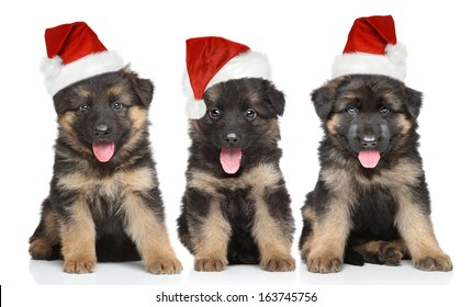 German shepherd puppies in red Santa hat on white background