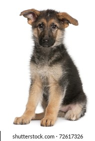German Shepherd puppy, 4 months old, sitting in front of white background