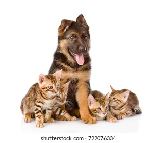 german shepherd puppy and bengal kittens together. isolated on white background
