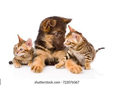 German shepherd puppy and two bengal kittens together. isolated on white background