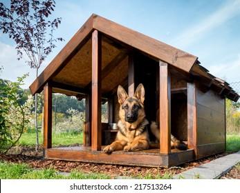 Deutscher Hirte, der sich in seiner Holzhütte ruht