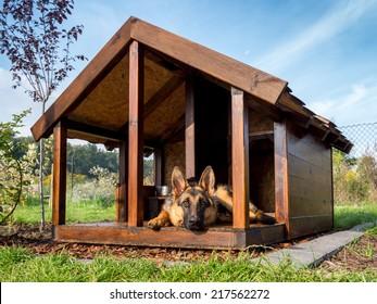 German shepherd resting in its wooden kennel
