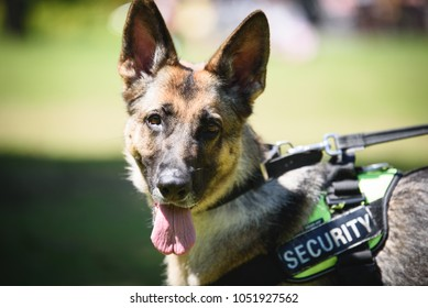 Police Dog Images, Stock Photos & Vectors | Shutterstock