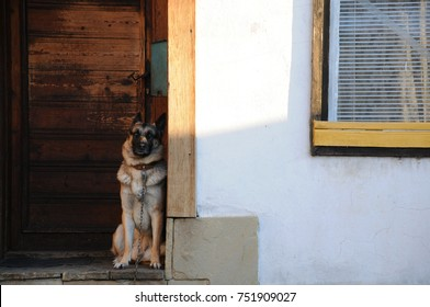 German shepherd sits at the door of the house