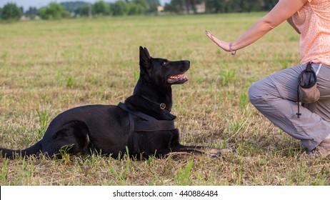 German Shepherd training (Sit command)