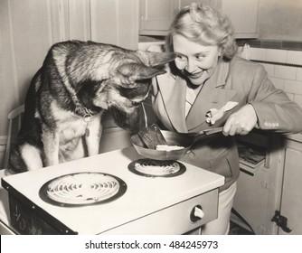 German Shepherd watching woman frying eggs