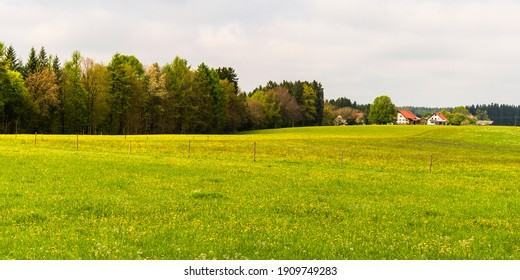 German springtime countryside landscape with blooming fields